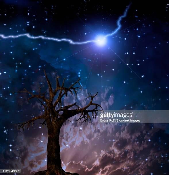 Old tree. Lightning bolt in starry sky