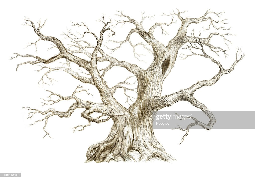 Old Tree With No Leaves : stock illustration