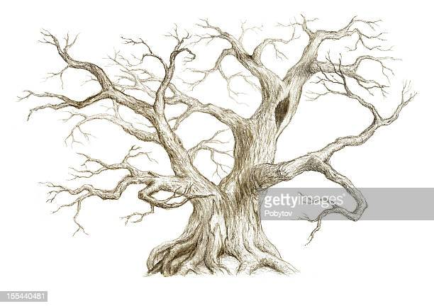 old tree with no leaves - tree trunk stock illustrations, clip art, cartoons, & icons