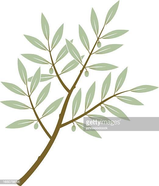 ilustraciones, imágenes clip art, dibujos animados e iconos de stock de olive branch tres - rama de olivo