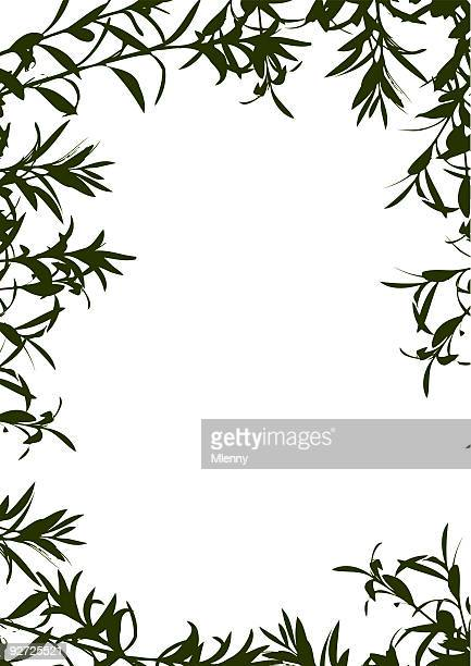 olive tree branches frame border - olive branch stock illustrations