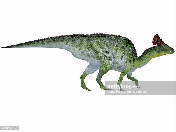 Olorotitan was a duckbilled dinosaur with a colorful fan-shaped crest on its head and existed in the Cretaceous Period.