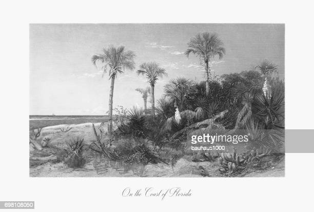 On the Coast of Florida, Florida, United States, American Victorian Engraving, 1872