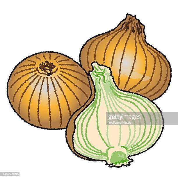 onions - plant bulb stock illustrations, clip art, cartoons, & icons