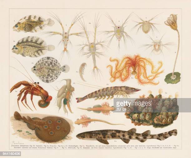Ontogeny of aquatic animals, lithograph, published in 1897
