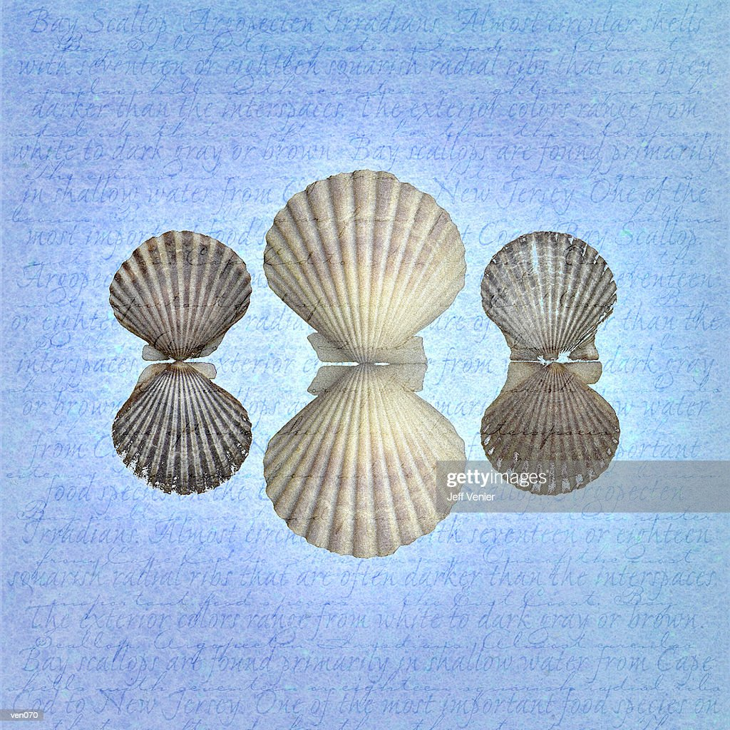Open Scallops on Descriptive Background : ストックイラストレーション