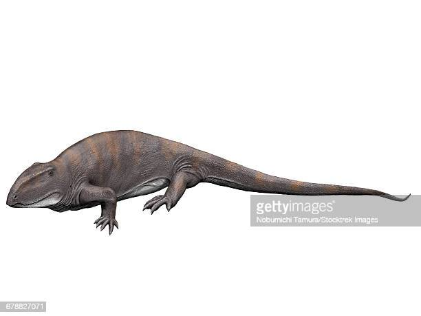 Ophiacodon mirus is an extint synapsid from the Early Permian of New Mexico.