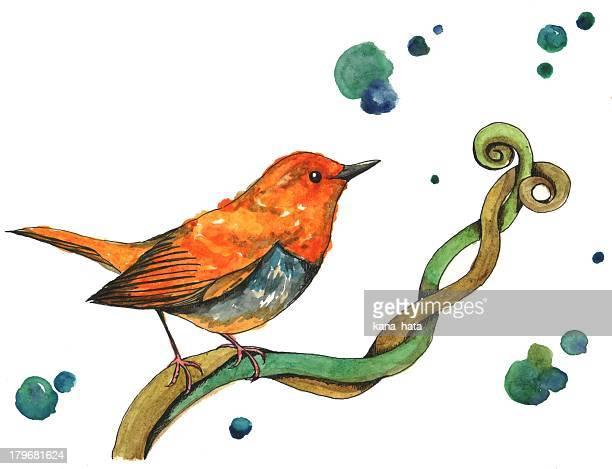 orange bird - branch stock illustrations