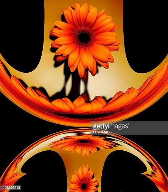 orange gerbera flower manipulation - digital enhancement stock illustrations