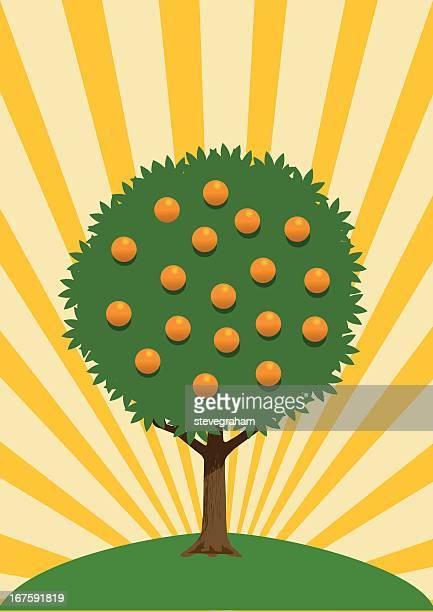 ilustrações de stock, clip art, desenhos animados e ícones de laranjeira - laranjeira