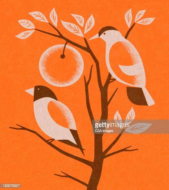 オレンジの 2 つの鳥の木