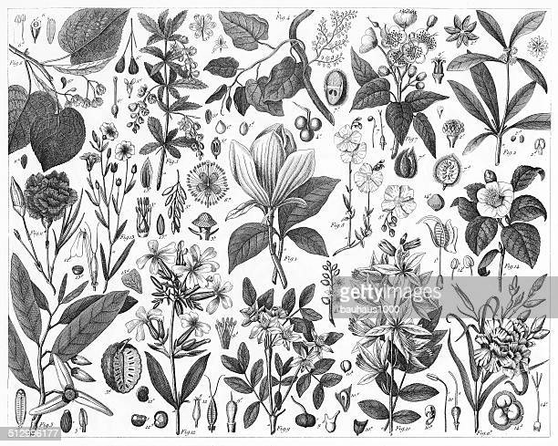 ornamental plants - woodcut stock illustrations