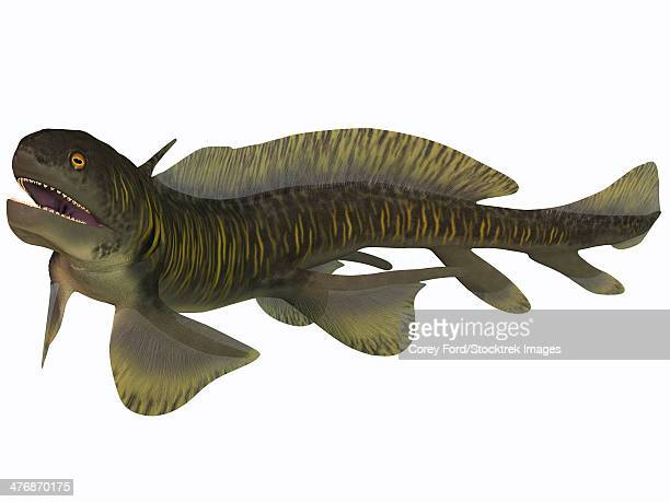 Orthacanthus was a Devonian freshwater shark that thrived in Carboniferous swamps and bayous in Europe and North America.