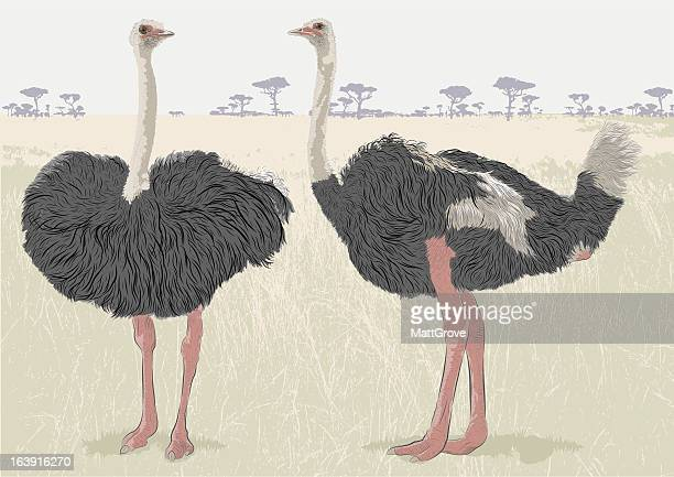 ostrich conversation - ostrich stock illustrations, clip art, cartoons, & icons