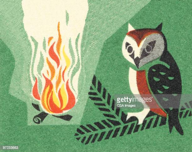 owl and campfire - branch stock illustrations