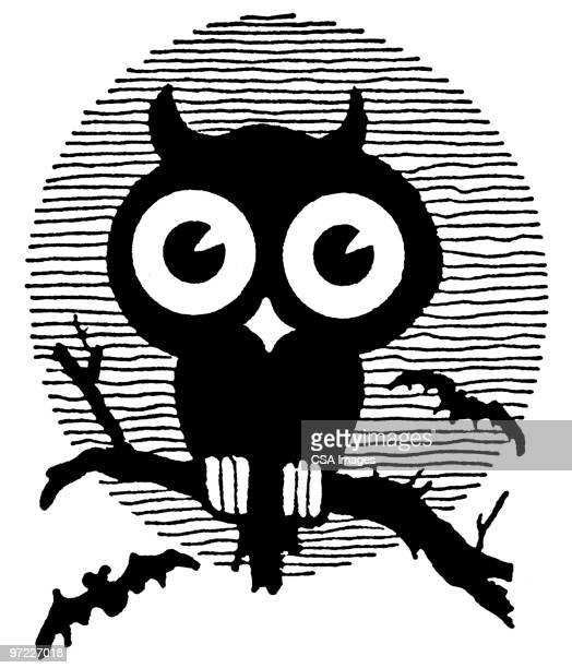 owl - staring stock illustrations