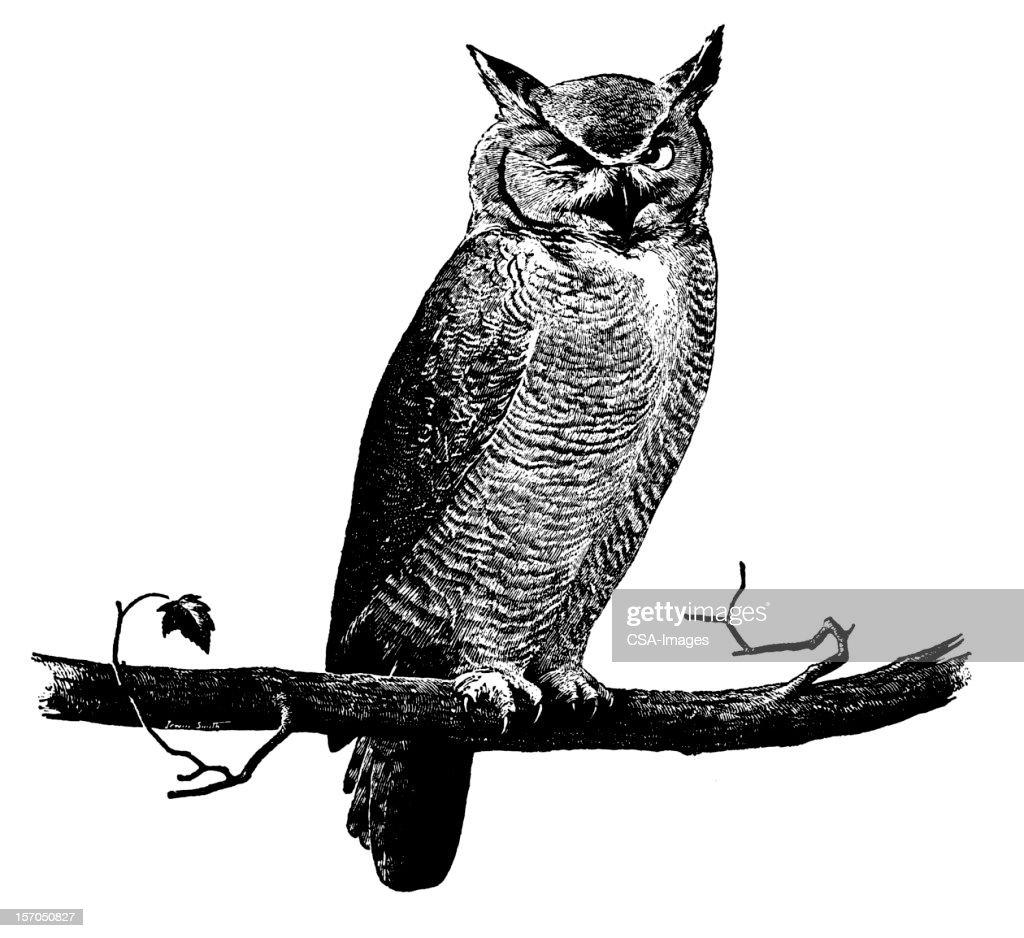Owl on branch : stock illustration