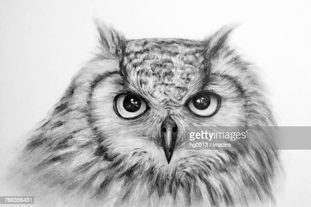 Illustrations et dessins anim s de hibou grand duc getty - Dessin hibou grand duc ...