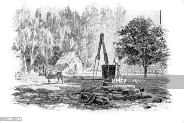 ox drawn coconut mill on seychelles illustration 1895 'the earth and her people' - coconut oil stock illustrations, clip art, cartoons, & icons