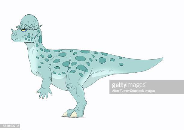 pachycephalosaurus pencil drawing with digital color. - animal body stock illustrations, clip art, cartoons, & icons
