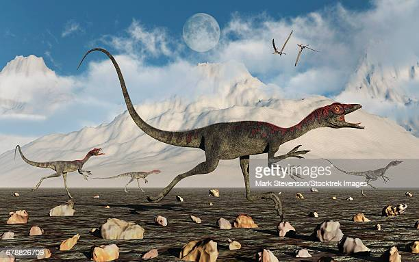 A pack of carnivorous Compsognathus dinosaurs during Earths Jurassic period.