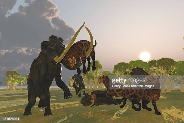 A pack of Saber Tooth Cats attack a small Woolly Mammoth while his herd comes to the rescue.