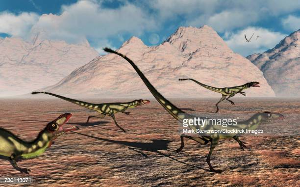 A pack of tyrannosaurid Dilong dinosaurs during Earths Cretaceous period.