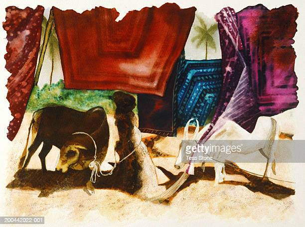 Painted cattle under hanging rugs