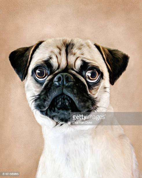 painted pug - aggression stock illustrations
