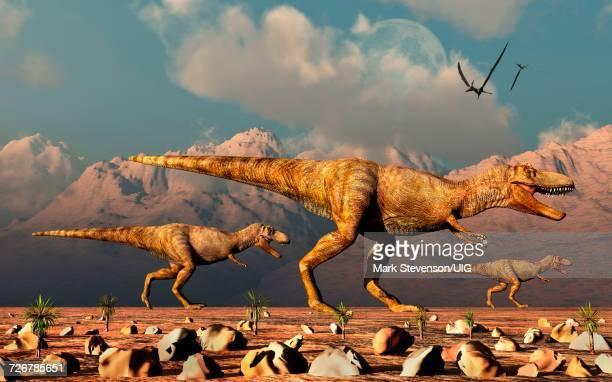 Pair Of Carnivorous Allosaurus Dinosaurs