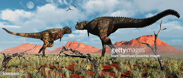 A pair of carnivorous Carnotaurus dinosaurs involved in a territorial dispute.