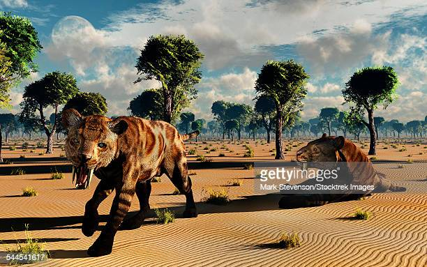 A pair of carnivorous Sabre-Tooth Tigers, also known as Smilodons, during Earths Pleistocene epoch.