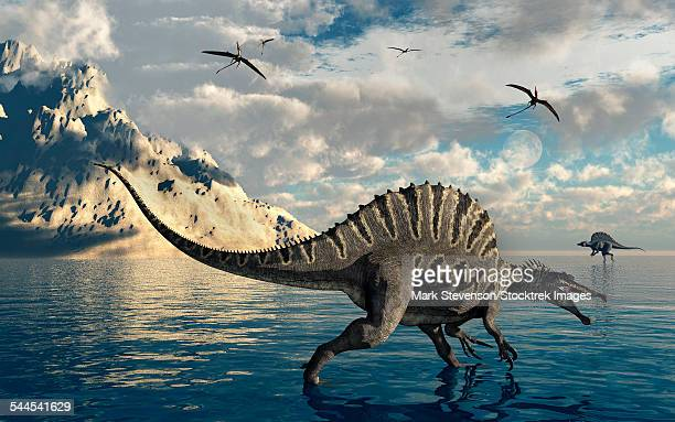 a pair of carnivorous spinosaurus hunting for fish during the cretaceous period. - animal spine stock illustrations, clip art, cartoons, & icons