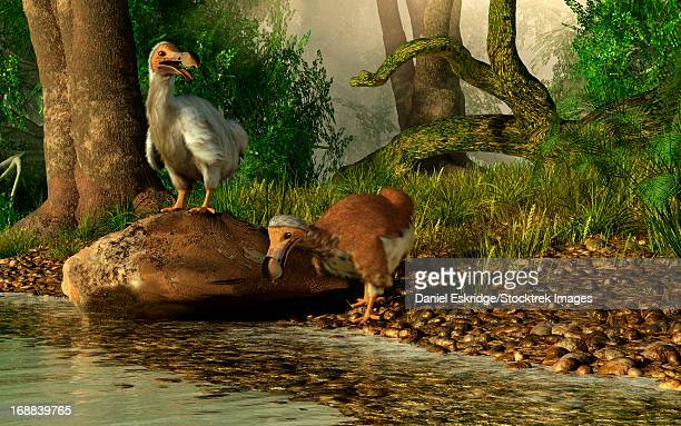a pair of dodo birds drinking at a river. - paleontology stock illustrations