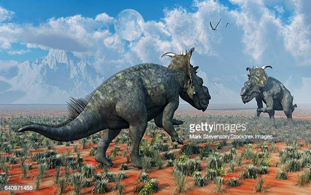 A pair of male Pachyrhinosaurus sizing each other up.