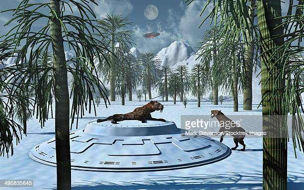 A pair of Sabre-Tooth Tigers encountering UFO's, whose occupants are involved in genetic experiments of life on Earth during prehistoric times.