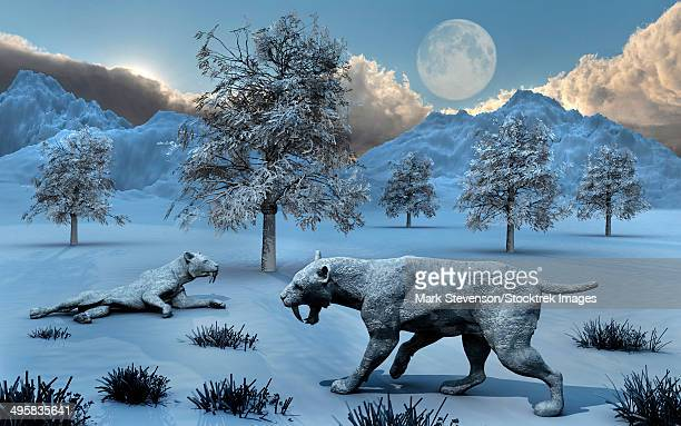 A pair of Sabre-Toothed Tigers surviving a prehistoric winter during the Pleistocene epoch.