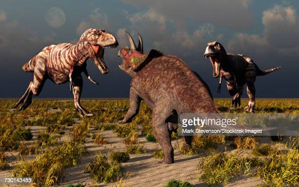A pair of T-rex dinosaurs attacking a lone Triceratops.