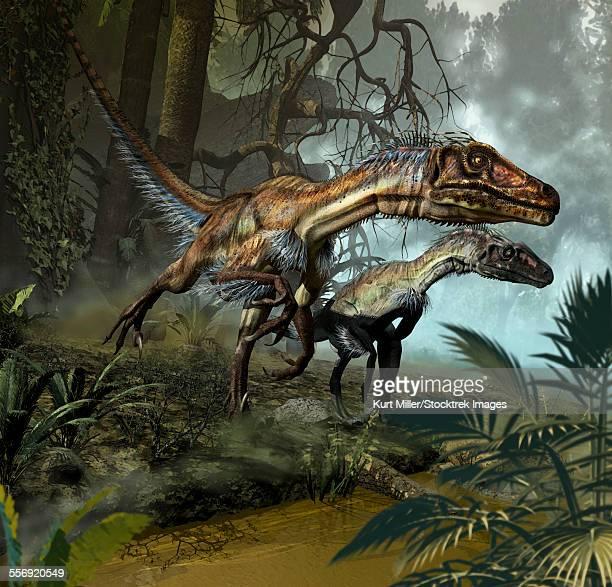 ilustraciones, imágenes clip art, dibujos animados e iconos de stock de a pair of utahraptors crossing a stream. - triásico