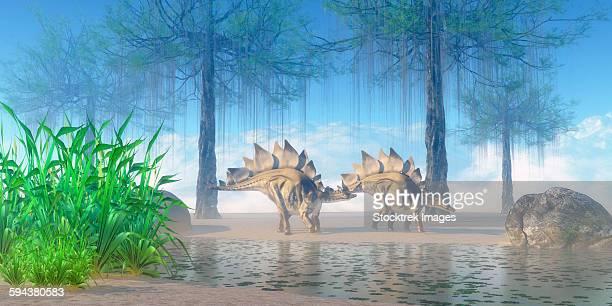 a pair stegosaurus walking near a pond on a jurassic misty morning. - thyreophora stock illustrations, clip art, cartoons, & icons