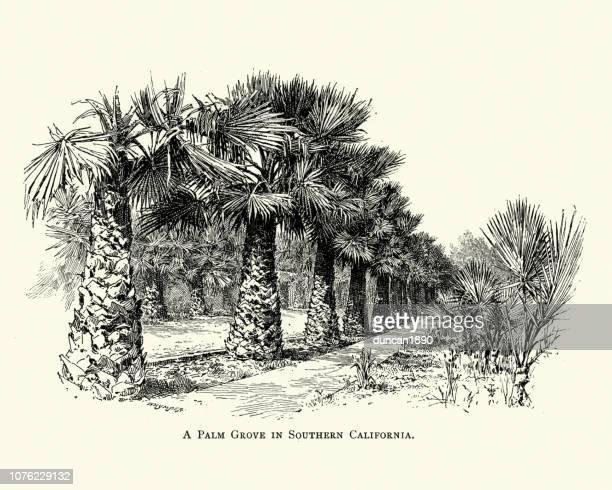 Palmeral en Sur, California, siglo XIX