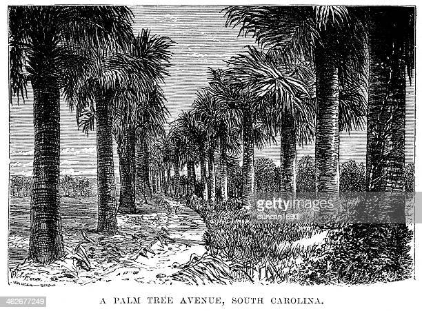 Palm Tree Avenue, South Carolina
