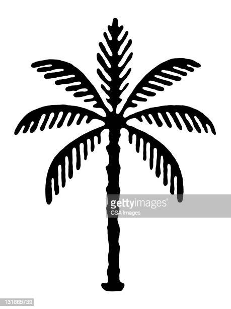 palm tree - branch stock illustrations