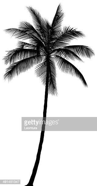 palm tree - coconut palm tree stock illustrations, clip art, cartoons, & icons