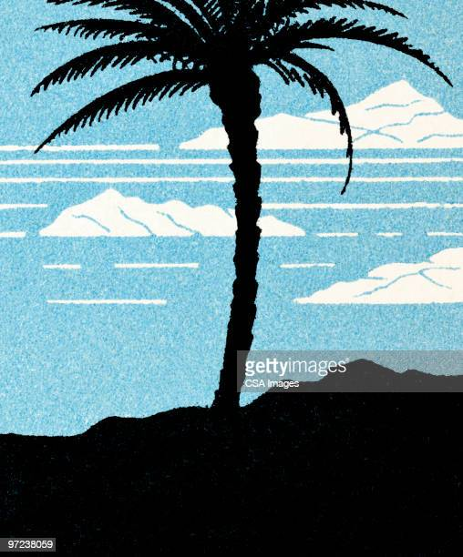 palm tree - pacific islands stock illustrations