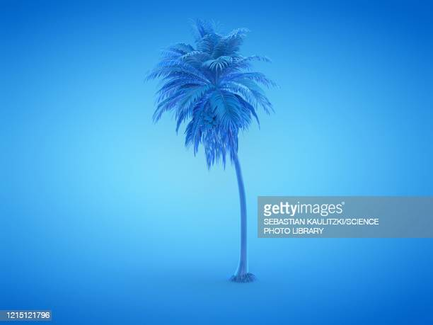 palm tree, illustration - digitally generated image stock illustrations