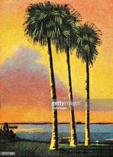 illustrations, cliparts, dessins animés et icônes de palm trees - île