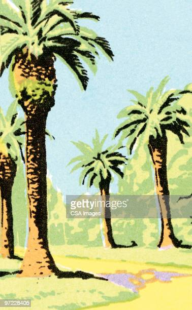 palm trees - pacific islands stock illustrations