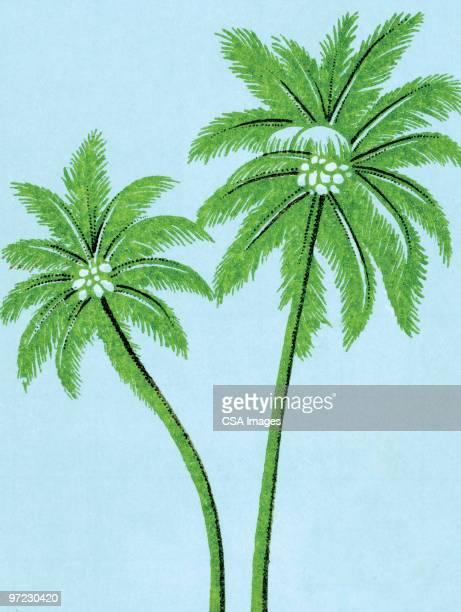 palm trees - coconut palm tree stock illustrations, clip art, cartoons, & icons