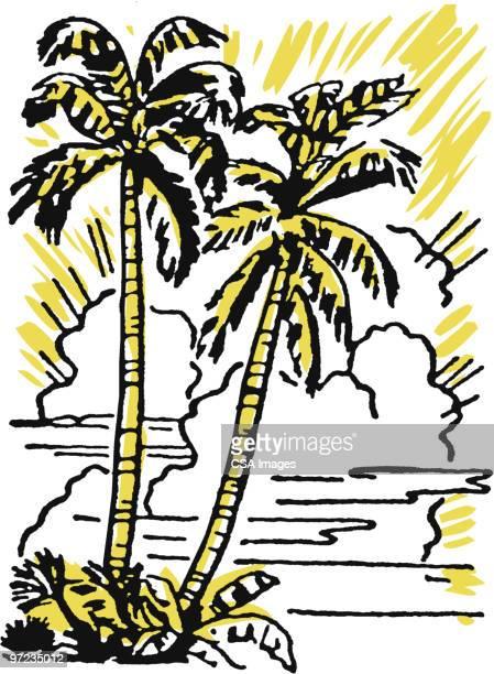 palm trees - sunset stock illustrations